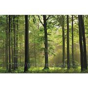 "Фотообои ""Осенний лес"" Wizard&Genius (Швейцария) фото"