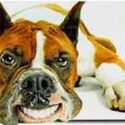 Лечение эпилепсии у животных фото
