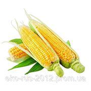 Кукурузное масло 3л. фото