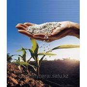 Минеральные удобрение (селитра) фото