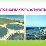Cresterea Chlorellei pentru a dezvolta suspensia algala Chlorela vilgaris în alimentatia animalelor фото