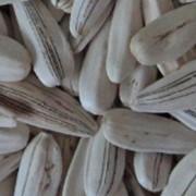 Семена подсолнечника белая фото