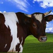 Премикс БВМК 60-3 для высокопродуктивных коров с ацетатом натрия фото
