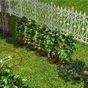 Садоводство фото