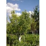 Защита деревьев фото