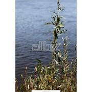 Украина, Херсонская область, Зализный порт, Отдых, оздоровление, лечение фото