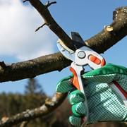 Обрезка деревьев сада фото