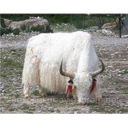 Натуральный мех ЯКА для одежды пластина белый фото