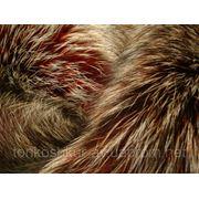 Лиса чернобурка сноутон бордо фото