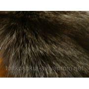 Лиса чернобурка 0/0 фото