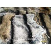 Рекс1 серый 1 п. фото