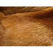 Мех натуральный нутрия разноцвет фото