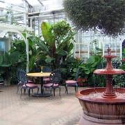 Зимний сад, озеленение помещений фото