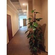 Профилактическая обработка растений фото