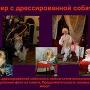 Собачка на день рождения фото