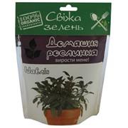 Шалфей - Домашнее растение фото