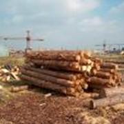 Автоматизированная система приемки круглых лесоматериалов фото