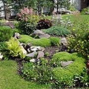 Услуга озеленения сада фото