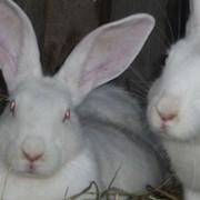 Мясо кроликов фото