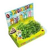 Поздравляю! Зверята Живая открытка Happy Plant наборы для выращивания фото