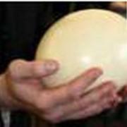Яйца страусиные фото