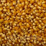 Кукуруза кормовая, porumb furajer фото