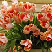 Услуги по флористике в Алматы фото