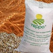 Крупа пшеничная озимая ТЕРРА №2, №3 фото