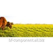 Препарат иммунопробиотический ветеринарный для КРС Лактобифадол Lactobifadolum фото