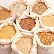 Крупы зерновые. фото