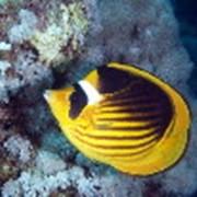 Рыбки аквариумные тропические