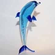 Дельфин1 фото
