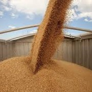 ЖД перевозка пшеницы в Костанае фото