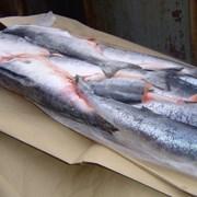Рыба оптом фото