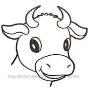 Купити замінник молока для телят