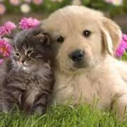 Корм для кошек и собак фото