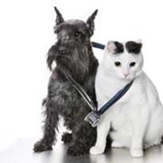 Интенсивная терапия в ветеринарии