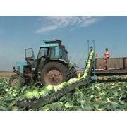 Транспортер для уборки овощей ТО-300 фото
