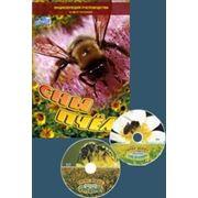 Фильм Сны пчел фото
