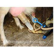 Доильный аппарат АД-02СК для коз, кобылиц, лосих и верблюдиц фото