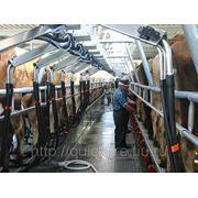 Доильные залы MILFOS (Новая Зеландия) фото