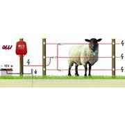 Овцы 12В/-2 - от 1 км до 1.3 км