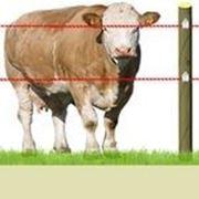 Электропастухи для КРС коров