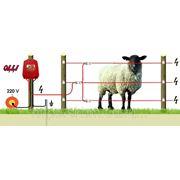 Овцы 220В/-1 - от 300 м до 600 м