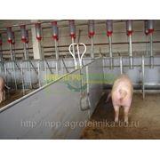 Клетки(сектора, боксы) для свиноматок фото