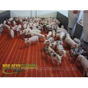 Оборудование для свиноводства, оборудование для свинарников фото