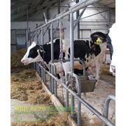Система поения привязного содержания коров фото
