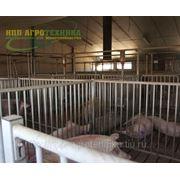 Клетки для свиней на откорме фото