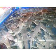 УЗВ автоматические рыбные фермы фото