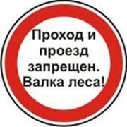 Знак Проход и проезд запрещен Валка леса фото